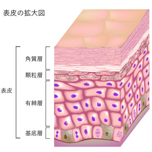 ニキビ跡の凹み治療・肌のクリニックの考え方2